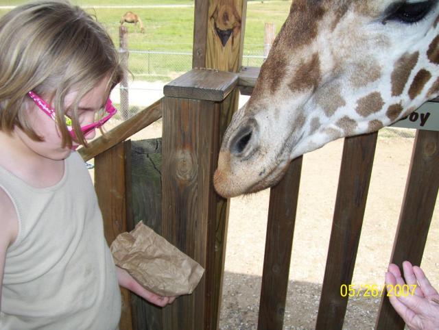 Kaylee feeding the giraffe